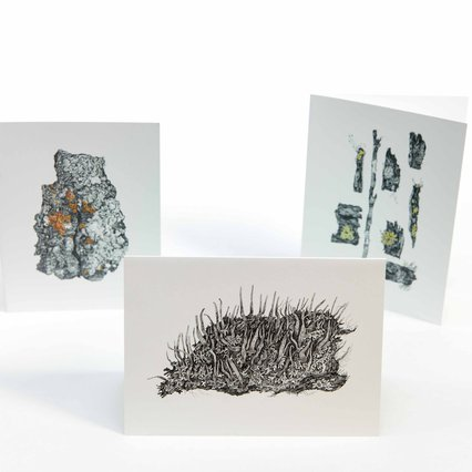 Amanda Schutz Illustration_Botanical Lichen Greeting Cards_7798