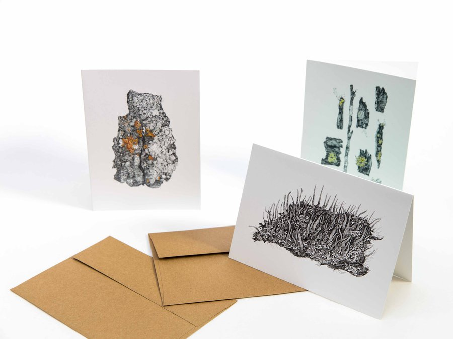 Amanda Schutz Illustration_Botanical Lichen Greeting Cards_7800